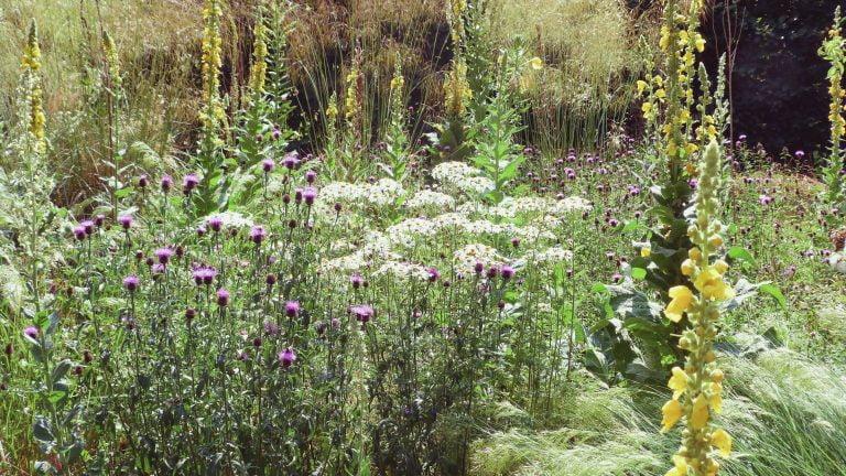 Überwiegender Naturgarten