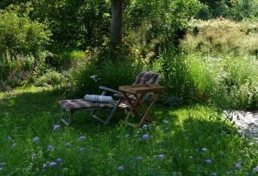 Heute im Naturgarten - Liege zwischen Wiesenwitwenblume und Margerite