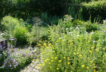 Heute in meinem Biogarten: Gemüse, Stauden und Wildstauden - ein Paradies für Wildbienen und Gemüsegärtner/innen