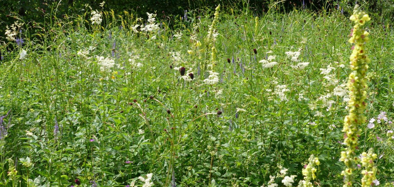 Heimische Wildstauden für den Feuchtstandort in ehemaligen Moorgegenden