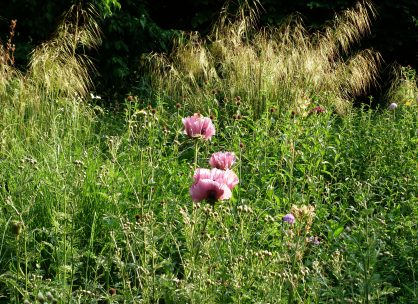2. 70/30 - Naturgarten