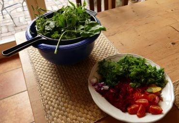 Wildkräuter-Salat im Hochsommer