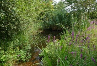 Der Teich im Spätsommer