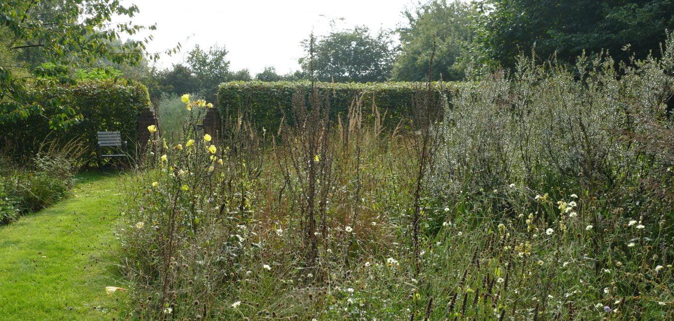 Restblüten: Naturgartenbeet im September