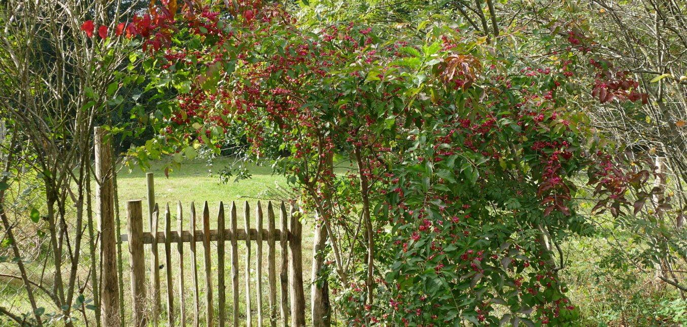 Herbst im Naturgarten - Rote Beeren für die Vögel