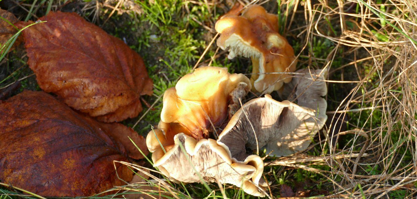 Jetzt schön im Naturgarten: Pilze