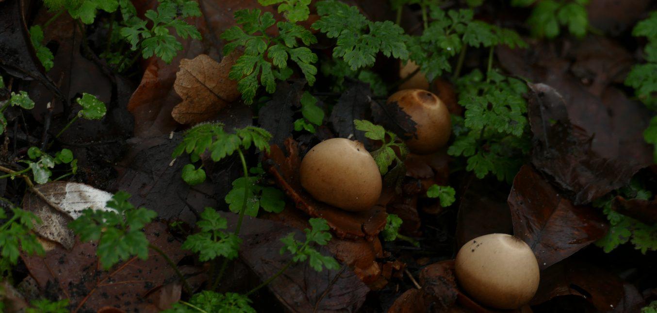 Pilze in meinem Naturgarten ...