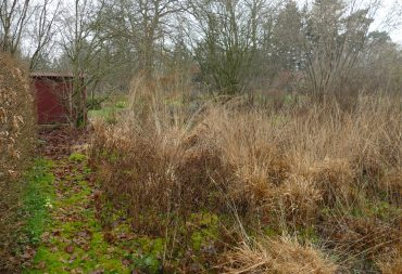 Winter im Mooringer Naturgarten - Pfeifengräser als Grundgerüst
