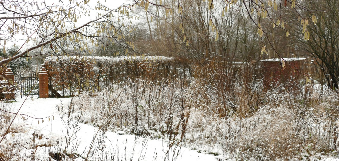 Gräser und Samenstände: der Naturgarten im Winter