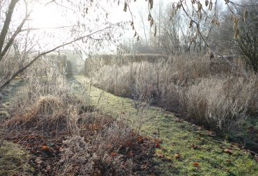 Naturgarten im Winter: Raureif